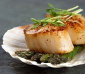 Studio closeup of seared scallops, garnished with pea shoots and served on a bed of asparagus, presented on a scallop shell.