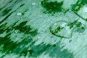 A Aloe Leaf After The Rain - Close Up
