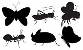 Illustration of the black colored insects on a white background