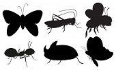 Ilustração dos insetos coloridos pretos sobre um fundo branco