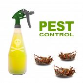 pic of pest control  - Plastic sprayer with insecticide and dead bugs - JPG