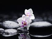 2,still life with two white orchid on pebble in water drop