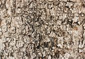 Texture Of Brown Tree Bark