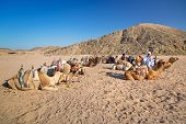 HURGHADA, EGYPT - APR 16: Unidentified bedouin people with camels resting on desert near Hurghada, A