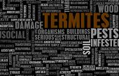 stock photo of termite  - Termites Concept as a Pest Control Problem - JPG