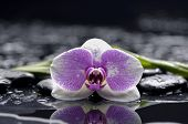 Macro of orchid and bamboo leaf on black stones