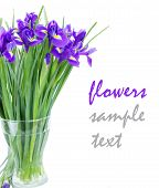 blue irise flowers posy in vase