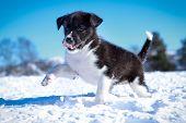 Holmen Puppy