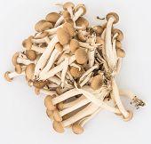 Shimeji Mushroom With Isolated Background