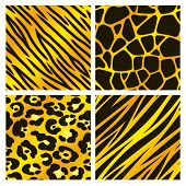 Gold Animal Print Collection