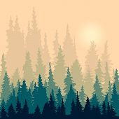 picture of fir  - landscape with silhouettes of fir - JPG