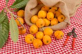 picture of loquat  - Still life with some freshly picked loquats - JPG