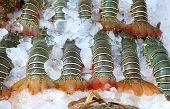 lobsters on ice