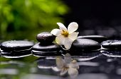 stock photo of gardenia  - gardenia flower on pebbles with green plant - JPG