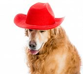 Retriever redhead in red cowboy hat