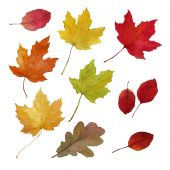 Autumn Fallen Leaves, Design Set