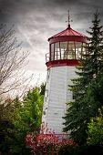 Old Lighthouse Nestled Among Trees