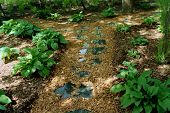picture of stepping stones  - Peaceful garden path with stepping stones that reflect the trees and sky above.