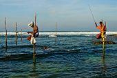 Sri Lankan Traditional Fisherman On Stick In The Indian Ocean