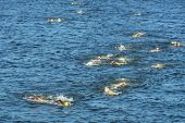 DNEPROPETROVSK, UKRAINE - MAY 24, 2014: Female athletes swims on the fist stage of ETU Sprint Triath