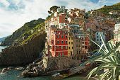 Houses on the rocks.  Riomaggiore,  Liguria , Italy
