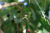 pic of spiderwebs  - Spider and spiderweb - JPG