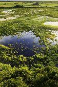 Aerial view of Pantanal in Brazil