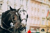 Two Horses Are Harnessed To Cart For Driving Tourists In Prague Old Town Square
