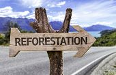 Reforestation wooden sign with a road background