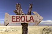 Ebola wooden sign with a desert background