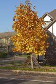 Autumn Colors In A Neighborhood Oregon.