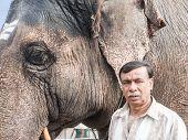 Elephant and Mahout at Nanjangud