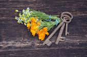 Key Of Health - Medical Herbs And Old Tools