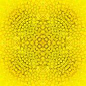 Warm Sunflower