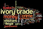Ivory Trade Words