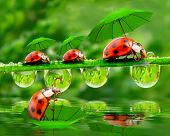 picture of ladybug  - Rainy day in nature - JPG