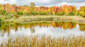 Autumn Reflection On North Dogwood Pond - Woodland Hills Nature Park, MI
