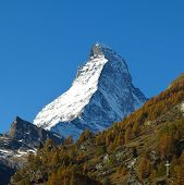 Matterhorn And Yellow Larch Forest