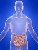 colon and intestine