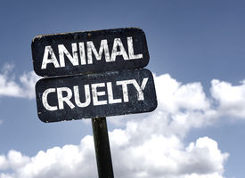 pic of animal cruelty  - Animal Cruelty sign with clouds and sky background  - JPG