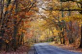 pic of temperance  - Road passing through a beautiful temperate forest at fall - JPG