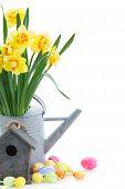 ������, ������: spring narcissus