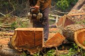 image of chainsaw  - The Chainsaw cutting the log of wood - JPG