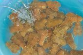 image of crustaceans  - Live crustaceans in the blue container with clear water - JPG