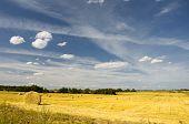 Amazing Golden Hay Bales On Sunny Day