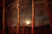 foto of moonlight  - Moonlight shining through the trees at night - JPG