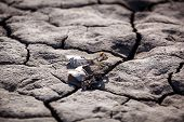 picture of drought  - Died and cracked soil - JPG