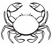 picture of crustacean  - Silhouette crab - JPG