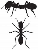 picture of ant  - Two ants in the form of a silhouette - JPG