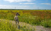 stock photo of wild horse running  - Foal running in a field with wild flowers in summer - JPG